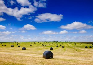 hay bales in a large field